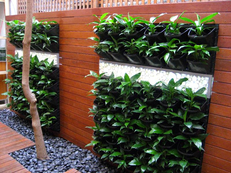 Brilliant Vertical Garden Ideas Australia Design By Atlantis