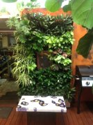 Vertical Gardens For Hire