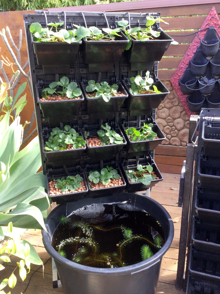 Aquaponics for the balcony